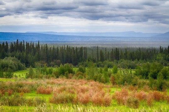 Alberta View